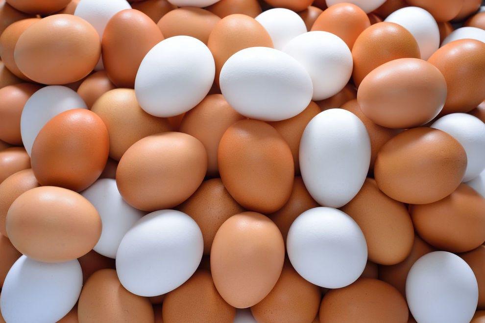 egg farm